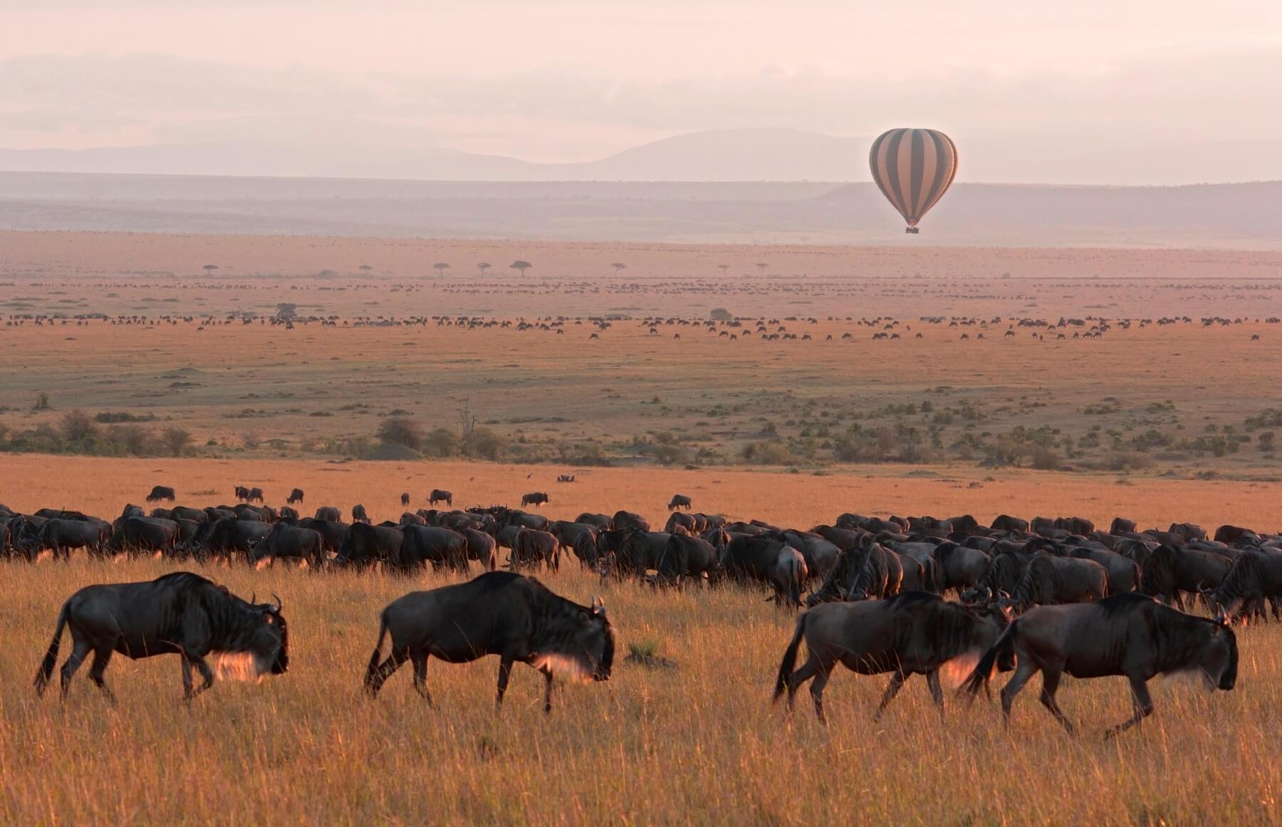 Ballonfahrten über der Masai Mara
