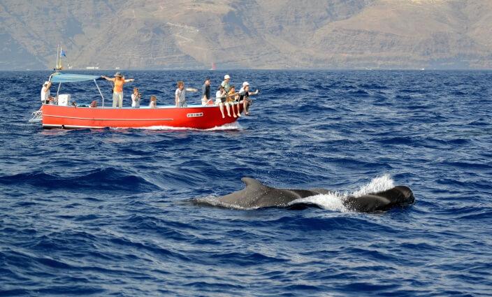 Whale-Watching-LaGomera-