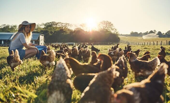 Wwoofing auf einer Farm im Ausland