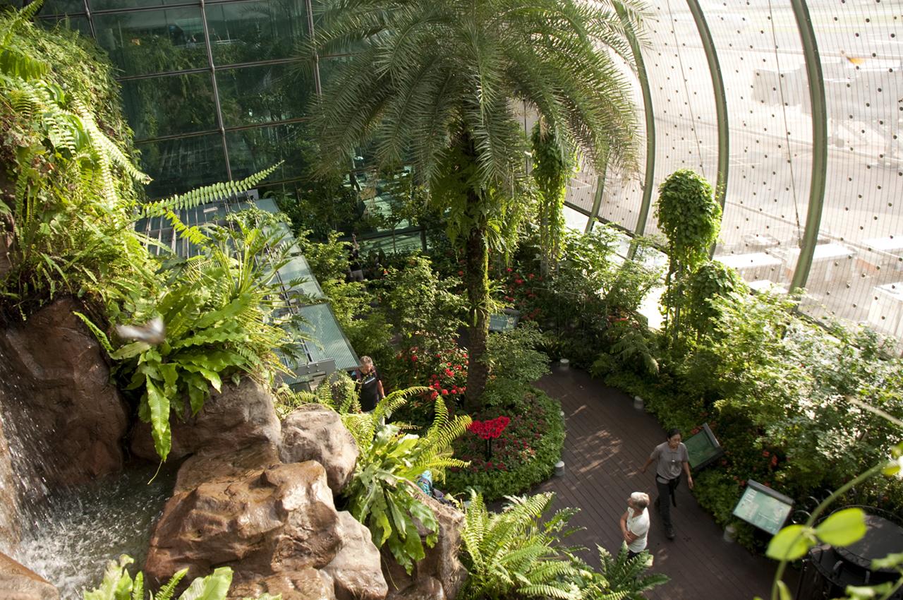butterfly garden flughafen singapur