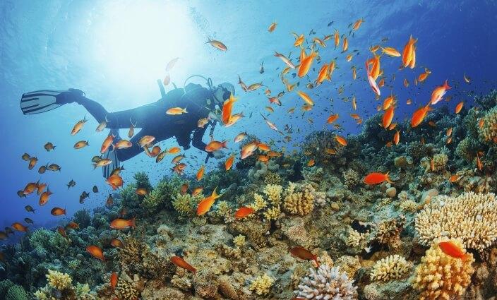 Tachen im Urlaub Taucher im Meer